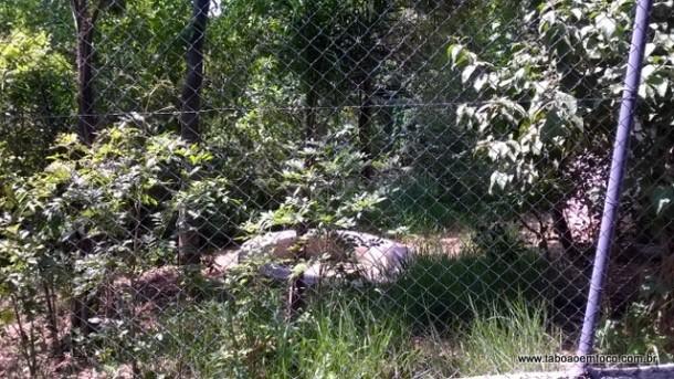 Recinto que vai receber a leoa Helga do Parque das Hortênsias.