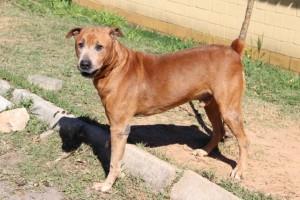 Cachorro no CCZ Taboao da Serra_Ago14_PMTS