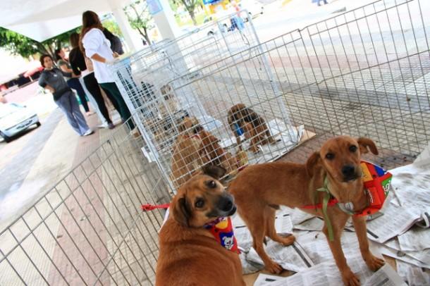 Foto 01: Feira de Adoção de cães e gatos já conseguiu doar 105 animais em 2014 (Foto:  W.Raeder / PMTS)