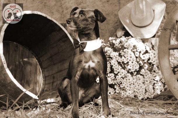 Na espera por adoção, cachorro ganha ensaio fotográfico em Taboão da Serra. (Foto: Divulgação)