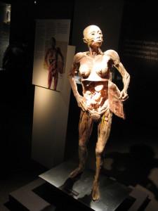 Exposicao Corpo Humano3_Divulgacao