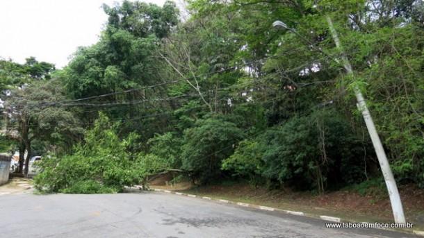 Árvore caída em Taboão da Serra.