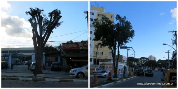 Nas primeiras podas, a árvore ficava praticamente sem copa. Após protestos e reclamações, funcionários da Prefeitura de Taboão da Serra foram mais generosos e deixaram algumas folhas.