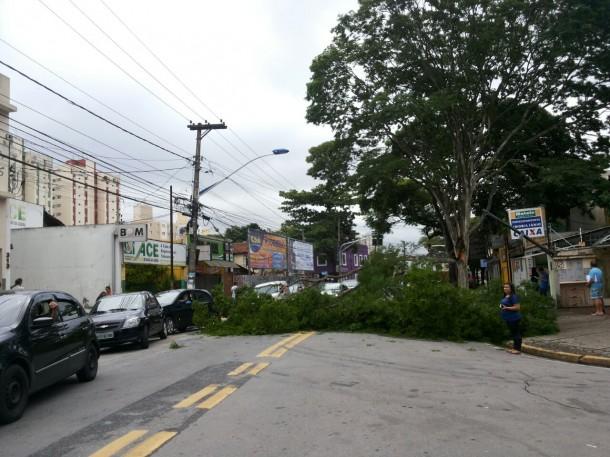 Árvore cai e ocupa parte da Avenida Armando Andrade. (Foto: Leitor Antonio Guerreiro)