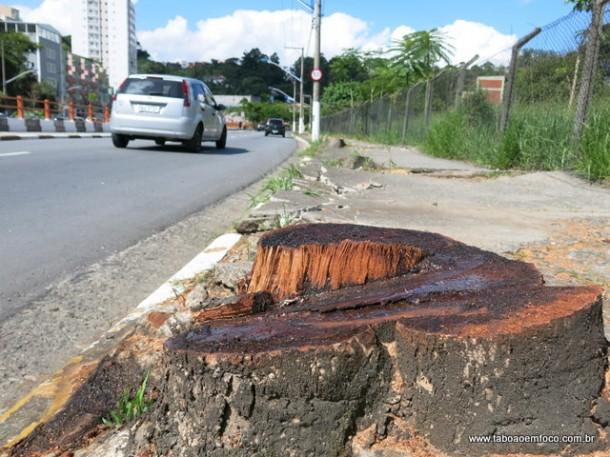 Prefeitura de Taboão da Serra arranca pelo menos 10 árvores na Avenida Armando Andrade.