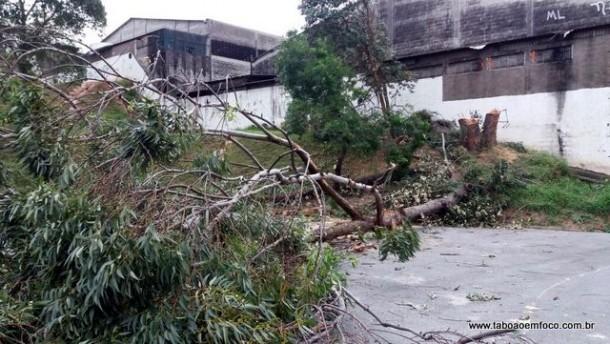 Árvores cortadas no ginásio de esportes no Jardim Helena, ao lado da Câmara Municipal.