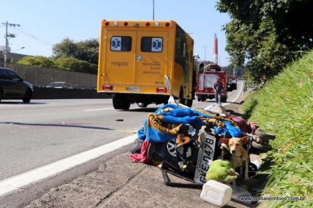 Cachorros ficaram na pista e seriam resgatados pelo Centro de Zoonoses da Prefeitura. Moradores deram água aos bichos.
