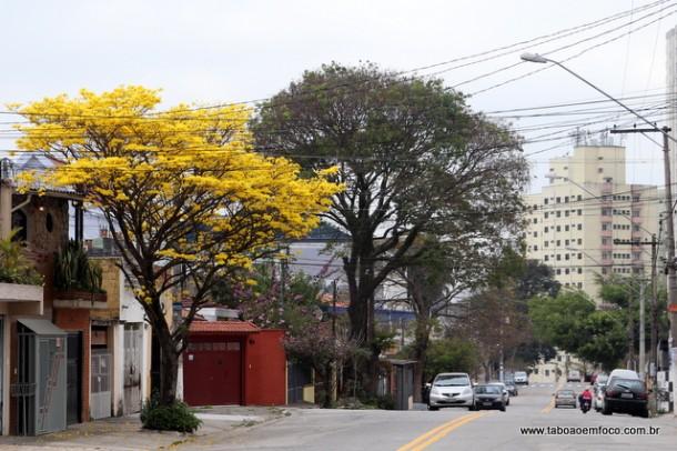 Primavera começa neste sábado (22). No Jardim Monte Alegre, Ipê Amarelo floriu para marcar a chegada da nova estação.