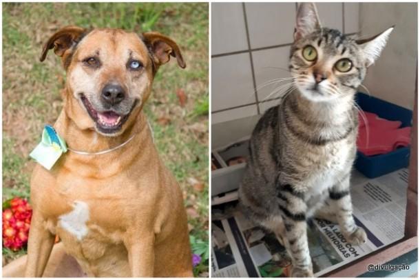 Dois dos animais que estão disponíveis na feira de adoção neste sábado (10).
