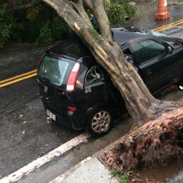 Temporal derruba árvore sobre carro no Jd. das Oliveiras